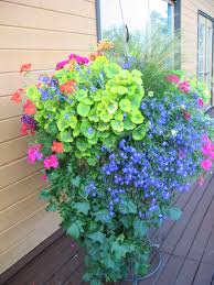 Plant Combination Ideas For Container Gardens Plant Supports Iron