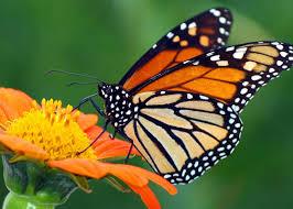 attract butterflies northeast garden