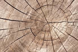 wood tree rings images Wood circle texture slice background tree rings stock image jpg
