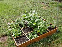 raised bed vegetable garden layout box raised bed vegetable