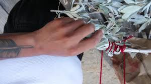 native plant nursery santa cruz amah mutsun native stewardship corps august 2016 in pictures