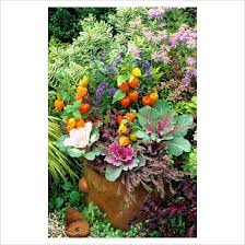 best 25 large terracotta pots ideas on pinterest formal gardens