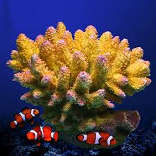 beautiful resin coral reef yellow blue 15 14 13cm artificial fish