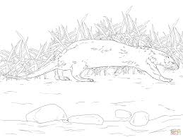 northern river otter coloring page free printable coloring pages