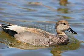 Duck Blind Images Duck Blind Images U0026 Stock Pictures Royalty Free Duck Blind Photos