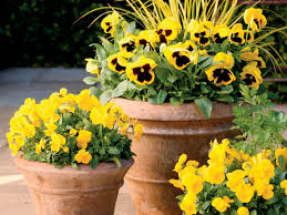 what to plant in fall southern living