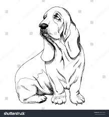 basset hound sketch stock vector 690011890 shutterstock