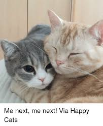 Happy Cat Meme - 25 best memes about happy cat happy cat memes