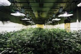 lovely warehouse grow room design amazing design home design
