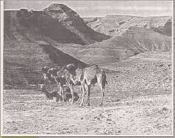 camel tents 1 nephi 2 4 tents donkeys camels