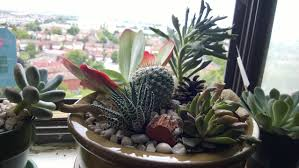 succulent dish gardens for sale home outdoor decoration