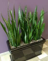 low light indoor plants tall indoor plants low light part a