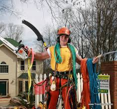 our tree service wants to work for you look at our deals lets do