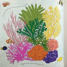 coral reef animal kingdom book millie marotta colouring