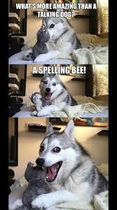 Meme Pun - the 25 best husky jokes ideas on pinterest funny husky jokes