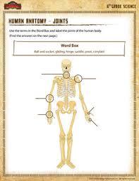 Human Anatomy Worksheet Human Anatomy Joints U2013 Free 6th Grade Science Worksheets U2013
