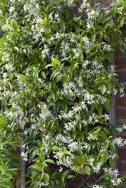 Tree Climbing Plants 12 Fast Growing Flowering Vines Best Wall Climbing Vines To Plant