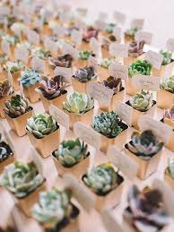 favor ideas best 25 succulent wedding favors ideas on succulent