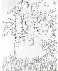 deer coloring pictures print free printable coloring