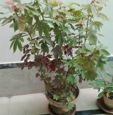 need guidance pakistan gardening forum