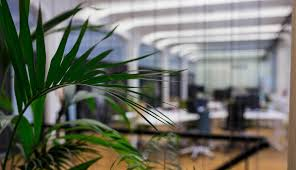 office plant office plant displays sales rental maintenance plantscapes