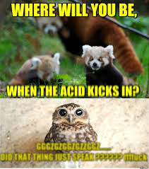 Funny Panda Memes - rmx dude like red pandas by scapulasnap meme center