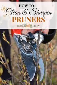pruning native plants best 25 pruning tools ideas on pinterest garden care organic