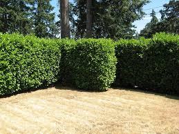 Plants For Home Decor Terrific Plants For Fences Pictures Best Idea Home Design