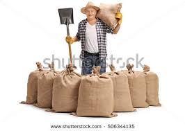 pile burlap sacks filled potatoes isolated stock photo 501773203