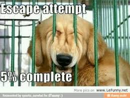 Omg Memes - escape attempt funny dog omg picture