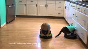 Roomba On Laminate Floors Sharkcat And Baby On Bumper Roombas Texasgirly1979 Youtube