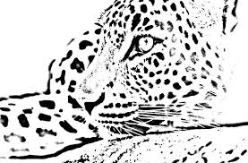 leopard coloring pages getcoloringpages