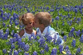 Bluebonnet Flowers - 15 amazing things you should know about texas bluebonnets kera news