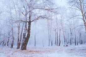 winter forest free stock photo domain pictures