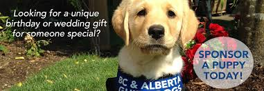 How Do Blind Dogs Know Where To Go Home Bc And Alberta Guide Dogs