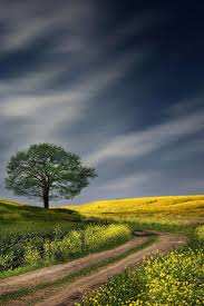Beautiful Landscape Photos by Top 25 Best Lone Tree Ideas On Pinterest Tree Photography