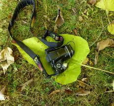 catalpa new hampshire garden solutions