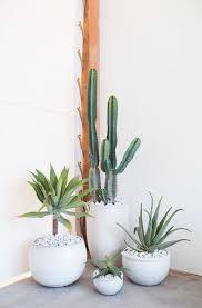 homelife top 15 indoor plants 74 best house plants images on pinterest indoor plants plants