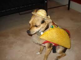 Taco Costume Dog Taco Costume Buycostumes Com