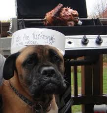 thanksgiving shaming photos of dogs being shamed on