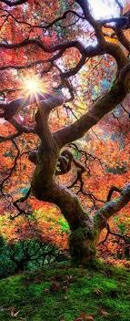 973 best made in oregon images on landscapes nature