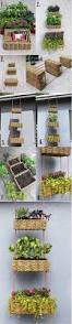 Hanging Herb Planters Best 25 Hanging Basket Garden Ideas On Pinterest Decorative