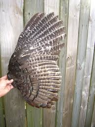 how to make turkey feathers 15 best turkeys feathers images on turkey feather and