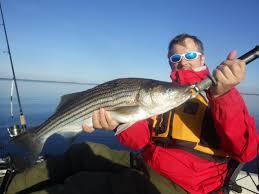 imgp2283 jpg the bay warms up and so do the bass coastal kayak fishing adventures