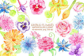 flowers edible watercolor edible flowers clipart illustrations creative market