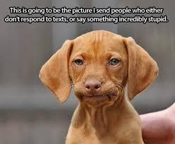 Frowning Dog Meme - frowning memes image memes at relatably com
