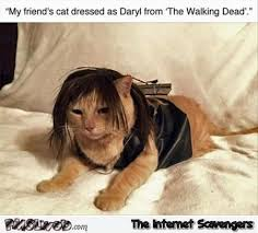 The Walking Dead Funny Memes - cat dressed as daryl from the walking dead funny meme pmslweb