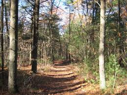 Massachusetts forest images Town forest franklin ma franklin ma massachusetts home sales jpg