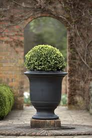 Eugenia Topiary 341 Best Boxwood Topiary Images On Pinterest Topiaries