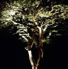 lighting design guide trees
